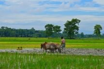 RubulKumarBania-Ploughing Field Landscape